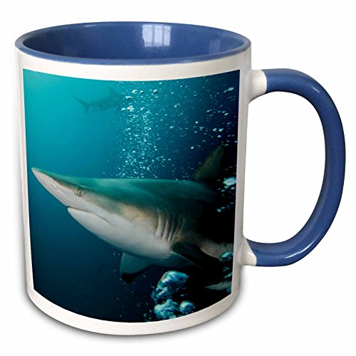 3dRose Danita Delimont - Sharks - Oceanic Black-tip shark and Remora, South Africa - 15oz Two-Tone Blue Mug (mug_225121_11)
