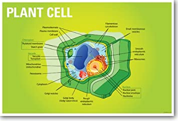Amazon plant cell biology new classroom biology poster plant cell biology new classroom biology poster ccuart Image collections
