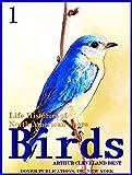 Life Histories of North American Shore Birds, Part 1 (of 2) (Illustrations) (Life Histories of North American Shore Birds Series)
