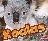 Koalas, Sara Louise Kras, 1429633107