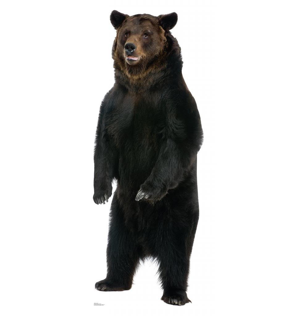 Brown Bear Life Size Cardboard Standup