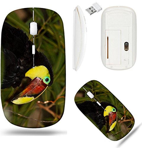 Liili Wireless Mouse White Base Travel 2.4G Wireless Mice with USB Receiver, Click with 1000 DPI for notebook, pc, laptop, computer, mac book The Chestnut mandibled Toucan or Swainson Toucan ()