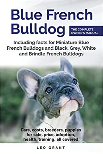 Blue French Bulldog: Care, costs, price, adoption, health
