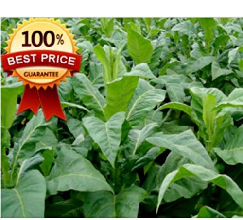 Casavidas Seeds Package: 200Pc++ Organic Virginia Heirloom Seeds + Gift! Hot Hot Hot
