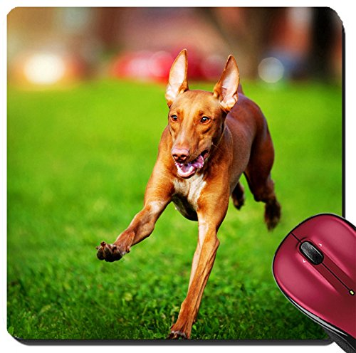 Liili Suqare Mousepad 8x8 Inch Mouse Pads/Mat cute funny Pharaoh Hound dog running on the grass IMAGE ID 18430641 New Pharaoh Hound