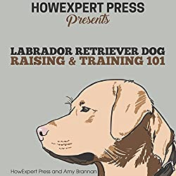 Labrador Retriever Dog Raising & Training 101