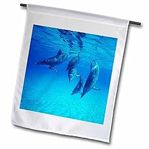 Florene Underwater Animals - Dolphins Underwater - 12 x 18 inch Garden Flag (fl_39010_1)