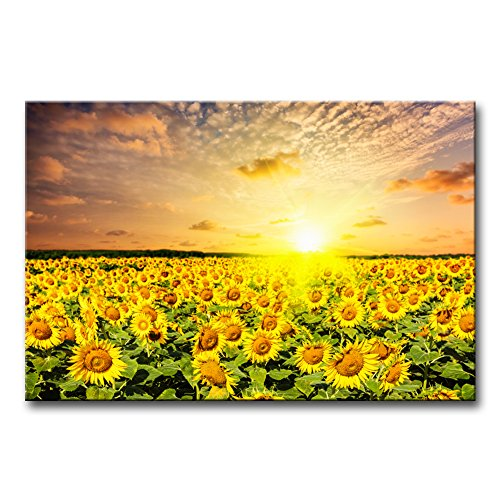 (Modern Canvas Painting Wall Art The Picture for Home Decoration Idyllic Scenic - Sunflower Field On Sunset with Dramatic Cloudscape Flower Sunflower Print On Canvas Giclee Artwork for Wall Decor)