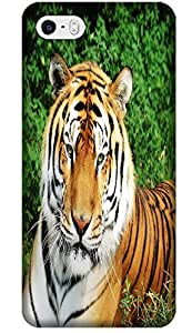 Fantastic Faye Cell Phone Cases For iPhone 5/5S No.11 The Special Design With Cute Foolishly Gray Pure Tiger On The Water Grass by lolosakes