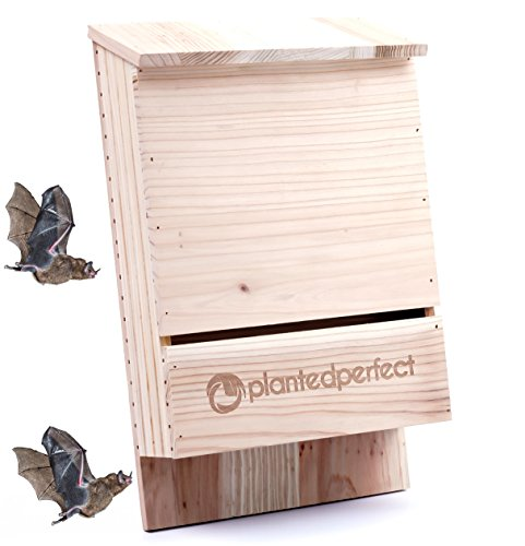 BAT House PEST Control - Bats Shelter Protects Home from Mosquitoes and Bugs - Dual Chamber Wooden Bat Boxes Built to Last - Houses Up to 360 Bats - Repels Pests from Garden - Satisfaction Guarantee