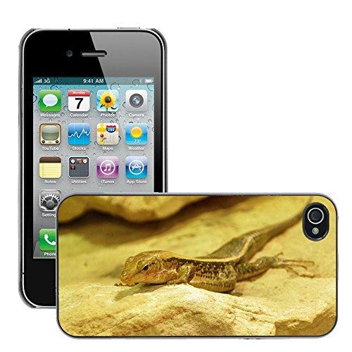 Bild Hart Handy Schwarz Schutz Case Cover Schale Etui // M00133895 Lizard Tiere Reptile Creature // Apple iPhone 4 4S 4G