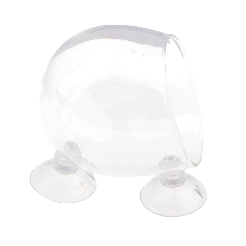 Gazechimp 5 Pcs Vaso Acuático Planta de Cristal Copa Tanque Pez Accesorios Titular Cómodo Florero Colgante