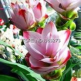 100 Seeds Turmeric Roots Curcuma Longa Medicinal Herb Spice * Easy Grow Plants Bonsai Seeds Garden Fresh Seed Pots