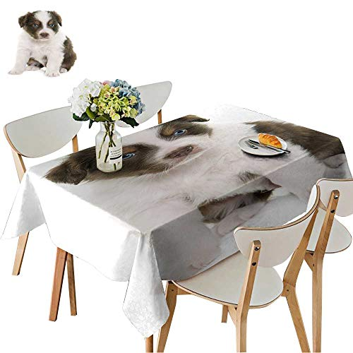 UHOO2018 Decorative Tablecloth Square/Rectangle Puppy Australian Shepherd in Front of White Background Assorted Size,54 x120inch.