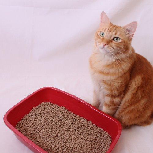 Liters Litter In Pounds Cat