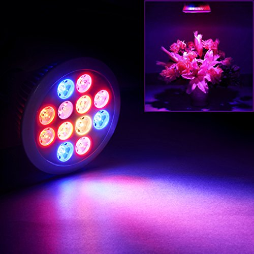 51okU6VryvL - Swiftrans LED Grow Light Bulb, 24w Plant Grow Light with Full Spectrum for Indoor Plants Greenhouse and Hydroponic Growing