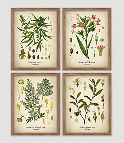 Drug Plants Vintage Print Set Cocaine Marijuana Absinthe Tobacco Wall Art Antique Botanical Art Medicinal Plants Decor Recreational Drugs Wall Art