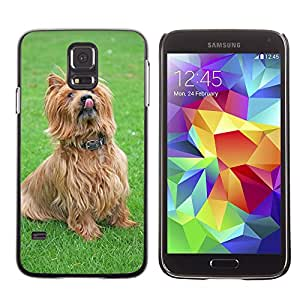 Etui Housse Coque de Protection Cover Rigide pour // M00109641 Perro de Terrier australiano Terrier // Samsung Galaxy S5 S V SV i9600 (Not Fits S5 ACTIVE)