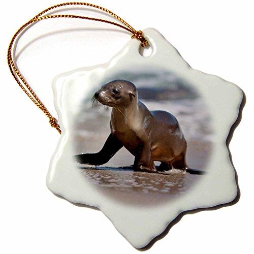 3dRose Danita Delimont - Seals - USA, California, La Jolla. Baby sea lion on beach. - 3 inch Snowflake Porcelain Ornament ()