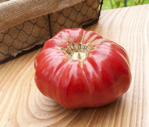 Pink Brandywine Sudduths Strain Beefsteak Heirloom Tomato Premium Seed Packet + More (Pink Tomato Brandywine)
