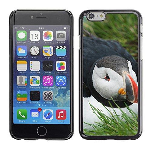 """Premio Sottile Slim Cassa Custodia Case Cover Shell // F00011322 Islande Puffin // Apple iPhone 6 6S 6G PLUS 5.5"""""""