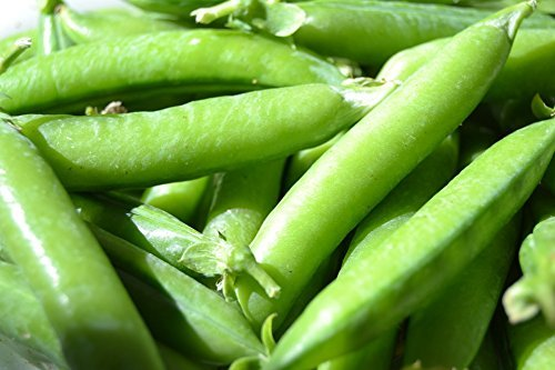 25 Sugar Snap Pea Seeds Pisum Sativum by RDR Seeds