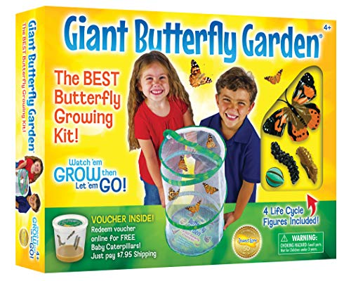 Insect Lore Giant Butterfly Kit: Deluxe 18