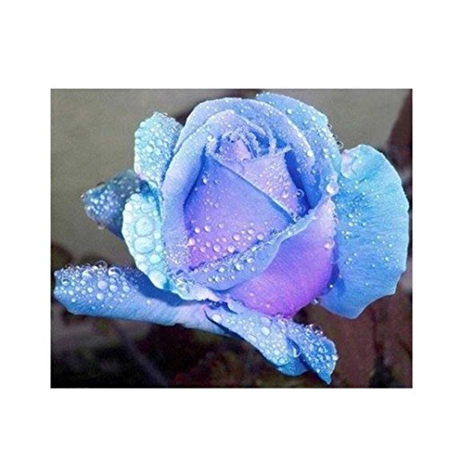- 5D Diamond Painting,Lavany Beauty Butterfly Rose Flower 5D DIY Diamond Painting By Number Kits Embroidery Rhinestone Pasted Home Decor,Cross Stitch Stamped Kits (I)