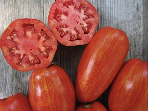 Organic Tomato 'Speckled Roman' (Lycopersicon Esculentum Mill.) Indeterminate Heirloom Seeds, NEW