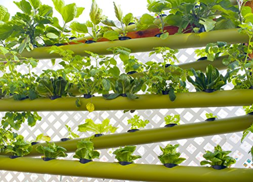 The 8 best hydroponic nutrients for herbs