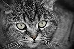 Download for free Cat Photobook No. 09