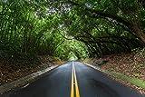 Canopy of trees over Nu'uanu Pali Dr., Honolulu, Oahu, Hawaii print picture photo photograph fine art