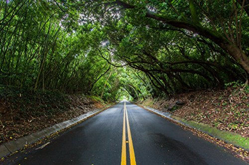 Canopy of trees over Nu'uanu Pali Dr., Honolulu, Oahu, Hawaii print picture photo photograph fine art by Mike Krzywonski Photography