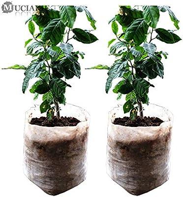 Amazon.com: 100/50 bolsas orgánicas biodegradables para ...