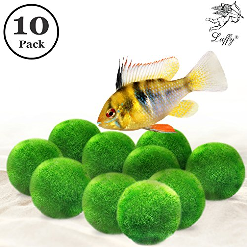Luffy 10 Marimo Moss Balls - Jumbo Pack of Aesthetically Beautiful & Create Healthy Environment - Shrimps & Snails Love Them ()