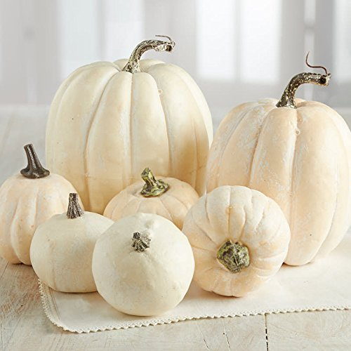 Factory Direct Craft 7 Assorted Size Harvest Off White Artificial Pumpkins & Gourds (White Pumpkins Faux)