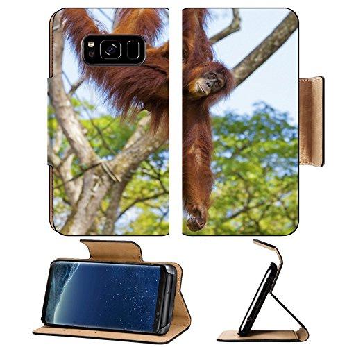 Liili Premium Samsung Galaxy S8 Plus Flip Pu Leather Wallet Case Orangutan in the jungle of Borneo Malaysia Photo 20894093 Simple Snap Carrying (Borneo Tattoo)