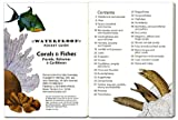 fishcardscom Waterproof Pocket Guide Book ~ Coral