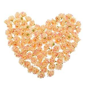 Gazechimp 100pcs Flores Miniatura Decoración Ideal Bricolaje Bodas Fiestas Tarjeta de Felicitación Alfileres Hogar - Champán