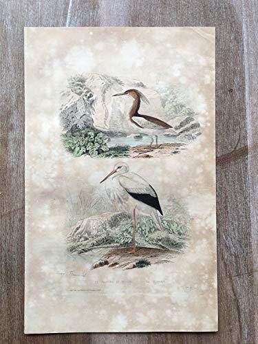 - 1870 Bird Original Antique Engraving, Hand Colored Engraving, Birds Engraving, Bird Art, Antique Bird Print, Antique Squacco Heron Print Art