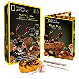 NATIONAL GEOGRAPHIC Real Bug Dig Kit - Dig up 3 Real Insects Including Spider, Fortune Beetle and Scorpion - Great STEM Science Gift