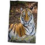 3dRose Danita Delimont - Brian Jannsen - Big Cats - Bengal Tiger at the Nashville Zoo, Nashville, Tennessee, USA - 12x18 Hand Towel (twl_189543_1) offers