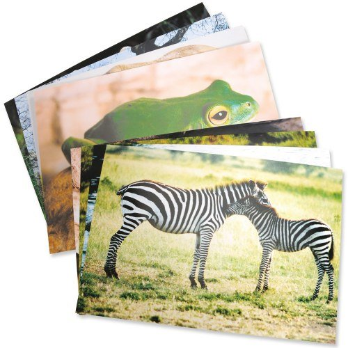 Stages Learning Materials Toddler Education Wild Animal Posters for Class Real Photo Decor for Preschool Bulletin Boards & Circle Time 9 Large Picture Cards (Chart Learning Animals)