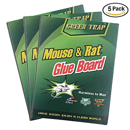 NoBuzz Mouse Rat Glue Trap, Strength Sticky Boards, Extra Large Size, Peanut Butter Scented, Catches Insect Lizard Spider Cockroach Rodent Scorpion Snake, Perfect Use for Indoor and Outdoor by NoBuzz
