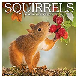 Squirrels 2021 Wall Calendar: Willow Creek Press: 9781549213427