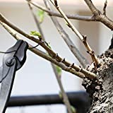 Hanafubuki Wazakura Japanese Bonsai Training Wire