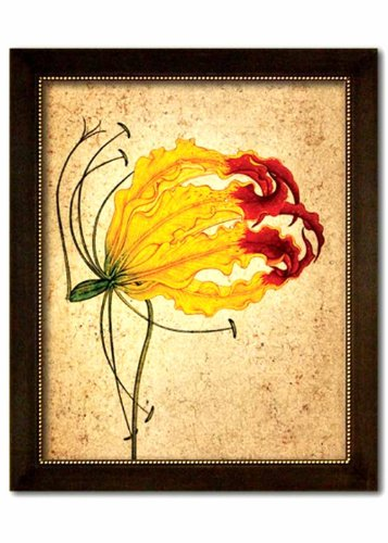 Study of a Flame Lily. Reproduction of an antique painting from Mughal India. Faux Canvas Frame. Overall Frame Size 24.5 x 19 inches. by IslamiCity