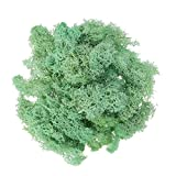 SUPVOX Preserved Fresh Moss Accessory Decoration for Wedding Party Garden 50g
