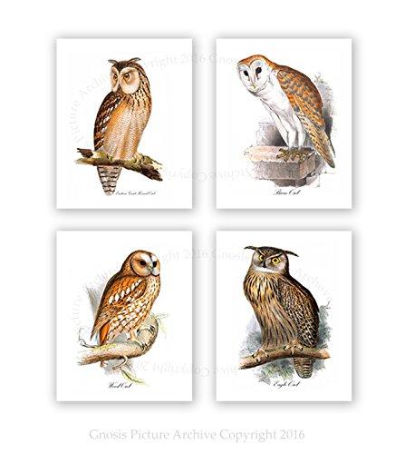 Owls Home Decor Set of 4 Unframed Owl Prints Woodland Animals Nursery Wall Decor ()