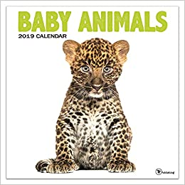 December 2019 Calendar Animals Time Factory Baby Animals 12